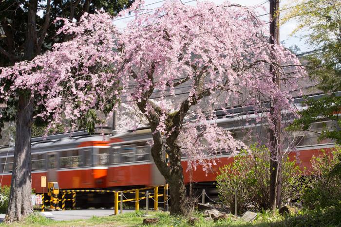 箱根登山铁道之春
