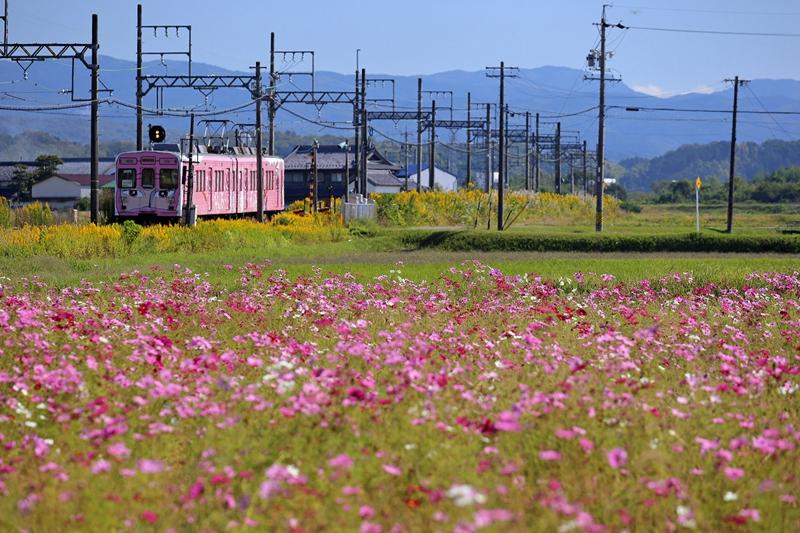 猪田道站附近的景色,一列粉色忍者列车