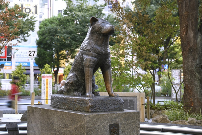 涉谷站前的忠犬八公铜像
